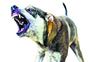 Stray canine menace troubles Jawaddi residents
