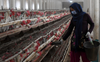 Health Department inspects poultry farms in Patiala district