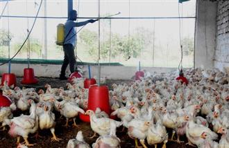 Bird flu: Centre rushes teams to Haryana, Kerala