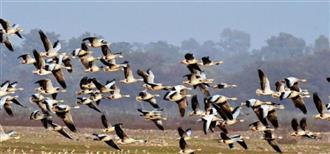 Bird deaths first noticed two months ago, claim villagers