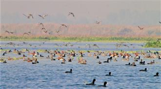 Amid flu scare, waterbird census continues