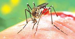 Dengue case count reaches 345 in Ludhiana