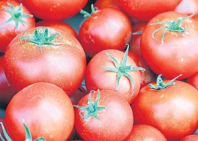 Tomato turns costly on tight supply; prices soar to Rs 72 per kg in metros