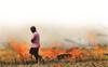 Haryana registers 68% drop in farm fires
