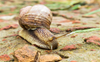 Slimy but useful: Snail mucus found to have uses in development of anti-cancer drugs, water purification