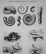 James Pettigrew saw symmetry in everything, everywhere