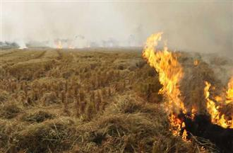 Stubble burning: At 692, cases in Malwa  lower than Majha belt