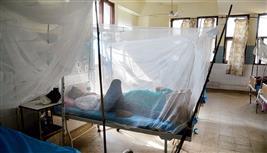 Jalalndhar district sees 33 new dengue cases