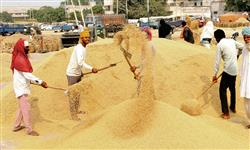 Farmers need assured price for sustenance