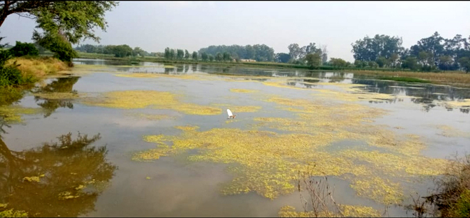 Jhajjar admn's efforts to drain out rainwater from fields prove futile