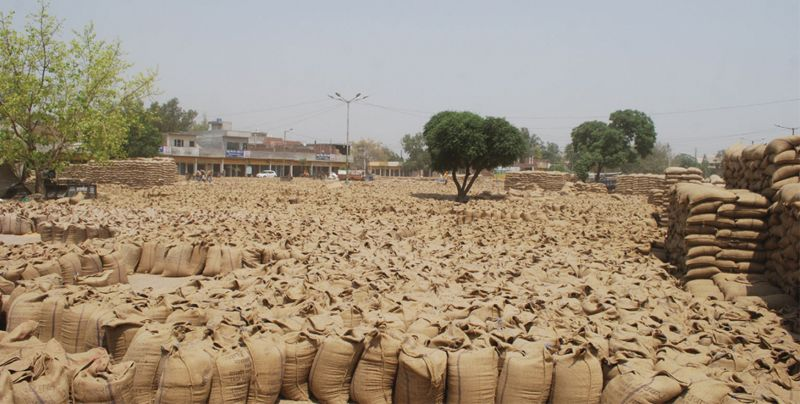 1.06L MT of paddy procured in Amritsar district, stubble burning on rise