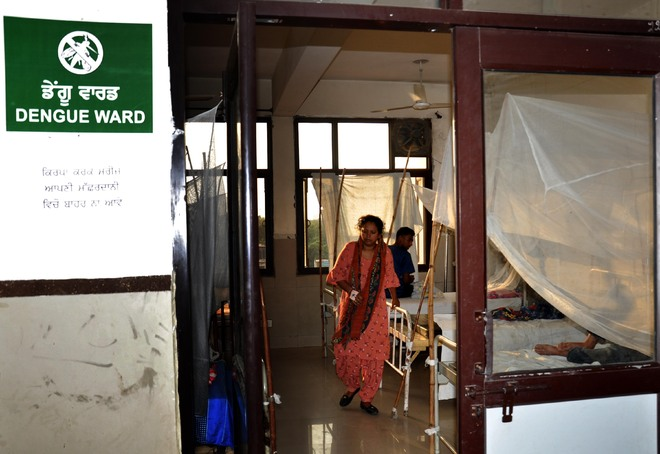 Amritsar: Dengue crisis far more alarming than it appears