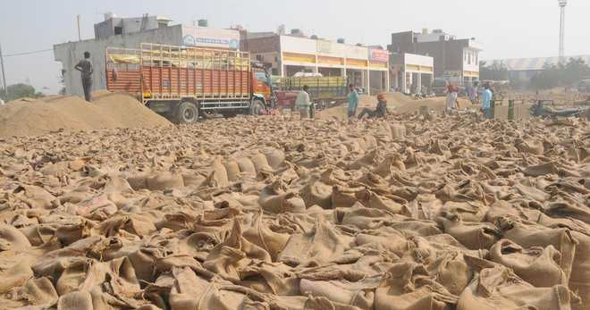 Over 60 per cent paddy lifted in Jalandhar so far
