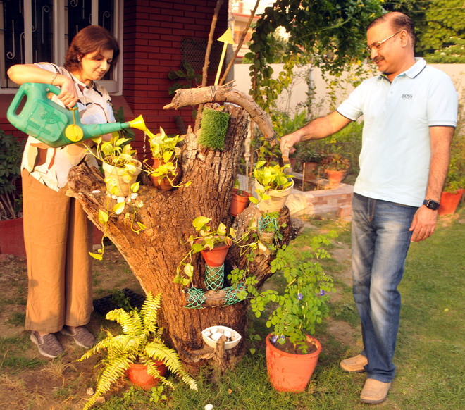 Green Fingers: A garden jazzed up with reclaimed wood
