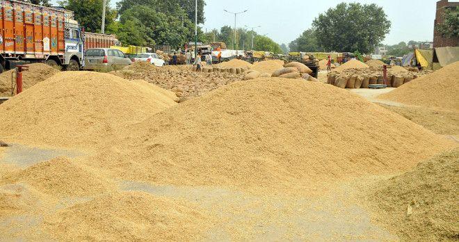 Ludhiana, Malerkotla farmers, agents feel 'harassed'