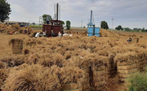 Karnal farmers putting paddy stubble to good use