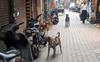 Residents flay MC over dog menace