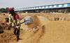 Himachal Kisan Sabha slams tardy lifting of paddy