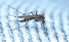 Dengue tightens grip on Patiala district, 76 cases in 48 hours