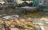 Amritsar: Dengue continues to wreak havoc at Vallah veggie market