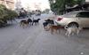 Tarn Taran Diary: No end to stray dog menace in district