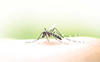 54 fresh cases of dengue in Mohali take count to 1,264