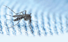 Surge in Dengue cases: Separate 50-bed ward set up at Mohali hospital