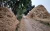 75K tonne straw for biomass plants