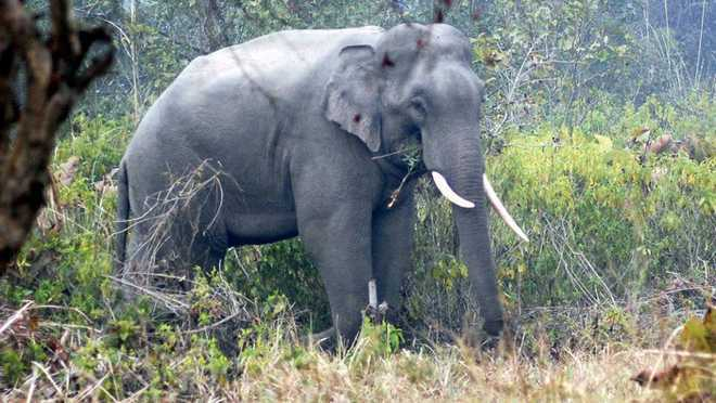 Man, 2 grandsons killed by wild elephants in Sidhi in MP