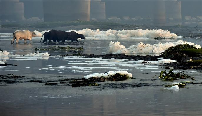 Yamuna pollution: SC issues notice to Jal Shakti Ministry, DJB, others