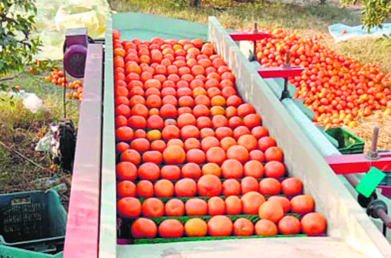 Kinnow growers of Punjab want freight train to South to sell produce