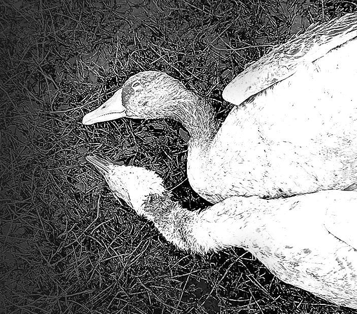 Area near wetland in Panchkula hit by bird flu