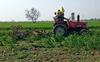 Muktsar man destroys crop on 3 acres