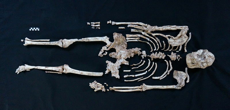 Painstaking study of 'Little Foot' fossil sheds light on human origins