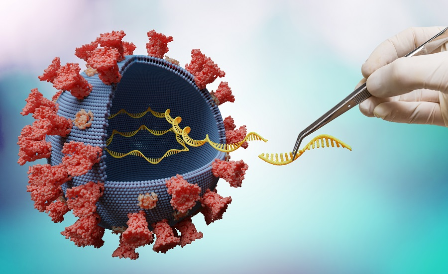 Faster spread of some coronavirus variants could be due to sturdier protein