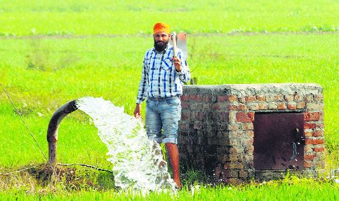 Wean farmers off wheat, paddy with incentives