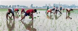 Link farming with employment to stem the rot