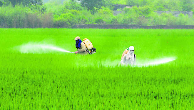 Agriculture sector, employees cornered lion's share: Experts