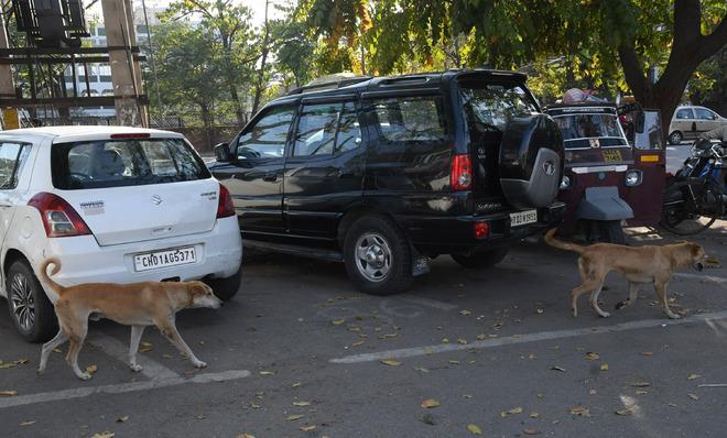 Online dog adoption facility in Panchkula soon