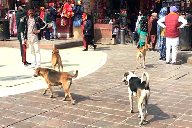 Chased & barked at, visitors dread morning visit to holy shrine