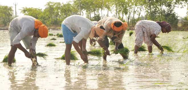 7,300 farm labourers ended lives in 18 years: Study