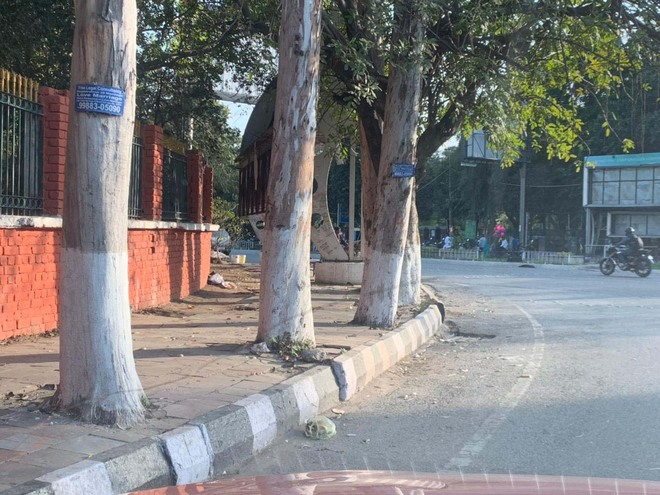 Petition filed against fixing of paver blocks around trees in city