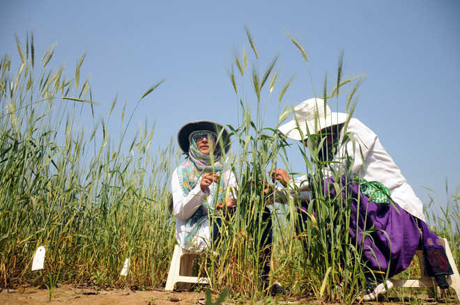 Climate change cut global farming productivity 21% since 1960s