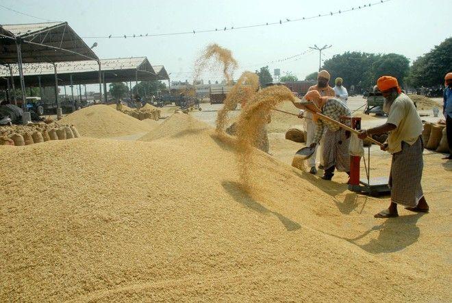 All set for wheat procurement: Ludhiana DC