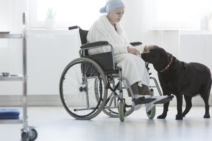 I want to pursue courses in animal-assisted therapy