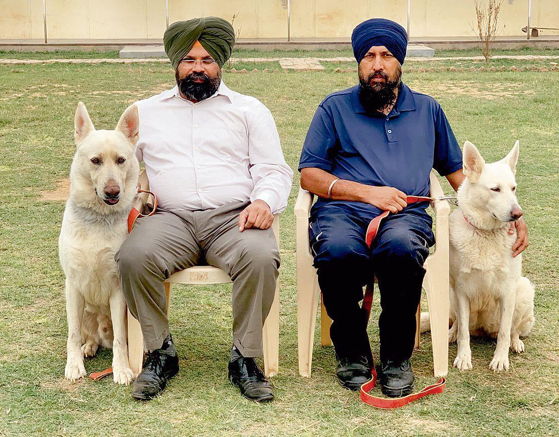 Top Punjab dog training institute in Dera Bassi faces existential crisis