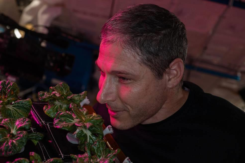 NASA astronaut successfully harvests 2 plants in space