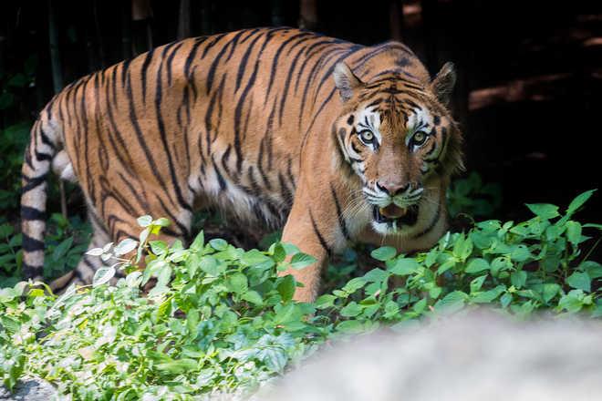 Ken-Betwa devastating for Panna Tiger reserve: Sonia to Javadekar
