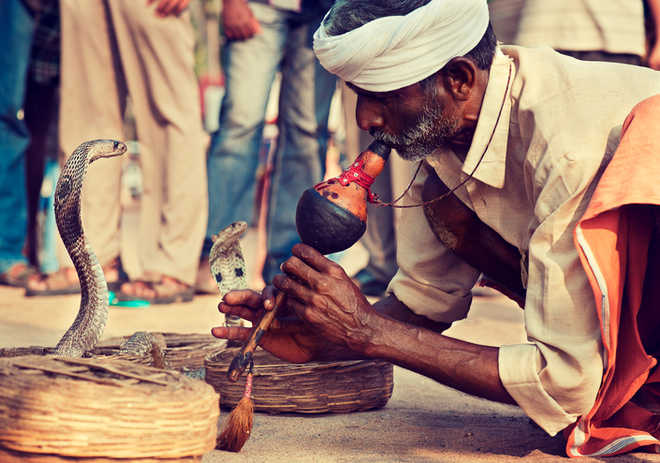 Ludhiana snake charmer who claims to treat COVID patients tests positive for infection