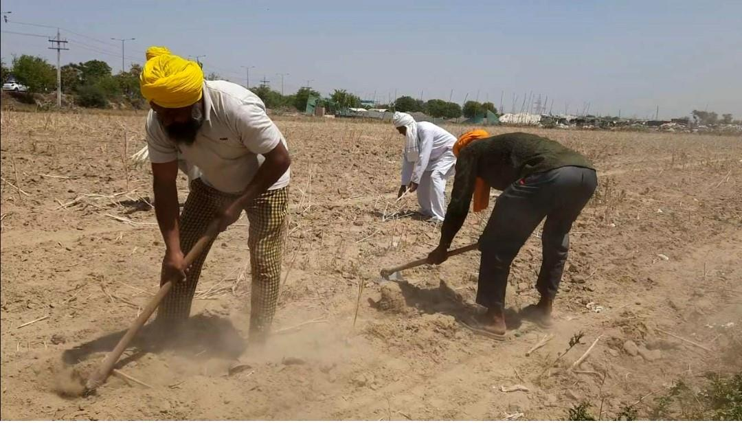 Bahadurgarhman gives 2-acre land to agitating Punjab farmers for cultivation